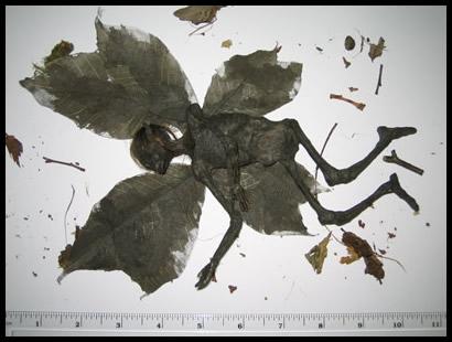 fairy autopsy photo.