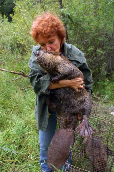 Beaver kissing