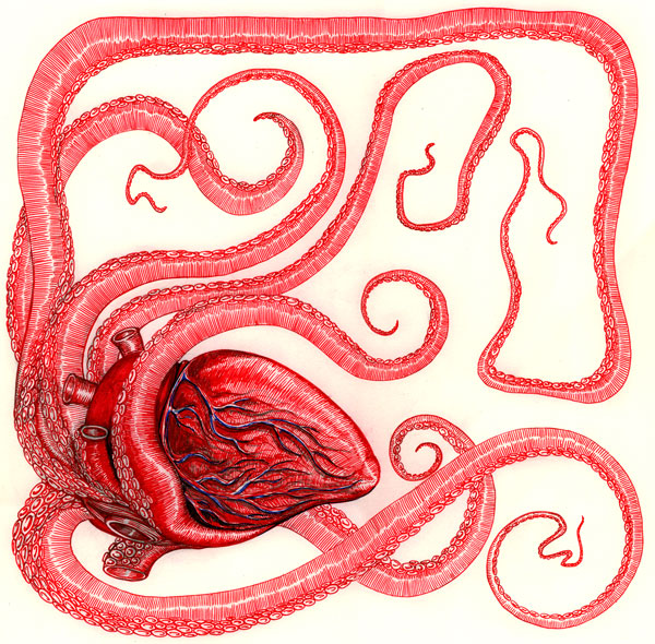 Sacred heart of octopus
