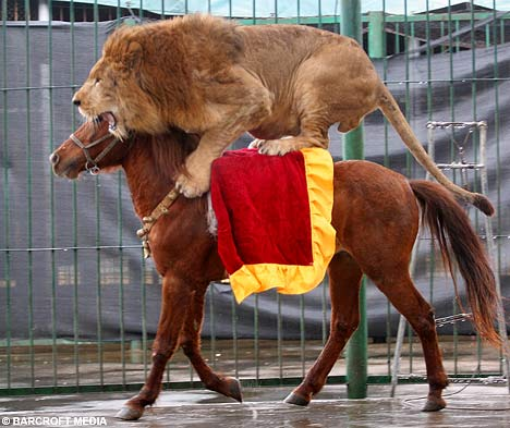 Lion on Horseback