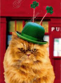 St Patrick's Cat