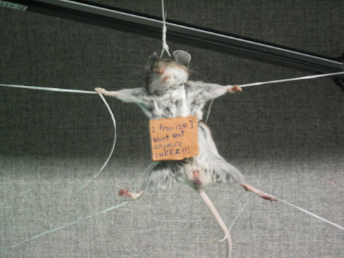 Mouse will thieve no more