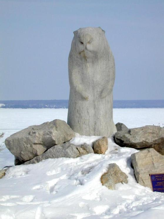 Wiarton Willie, rock hard and ready for action