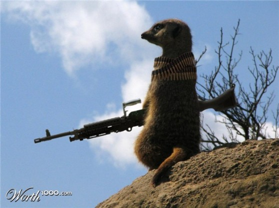 Meerkat Sniper caught in the act, the bastidge!