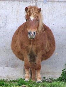Fat Horse