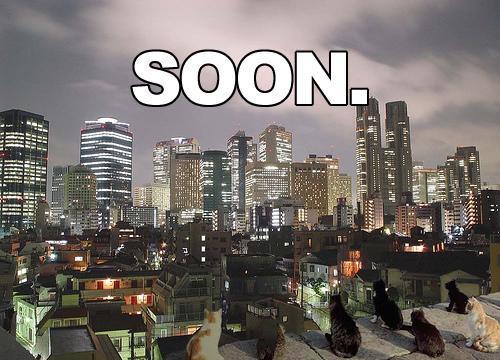 lolcat apocalypse