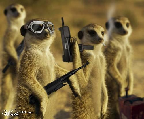Meerkat Mafia