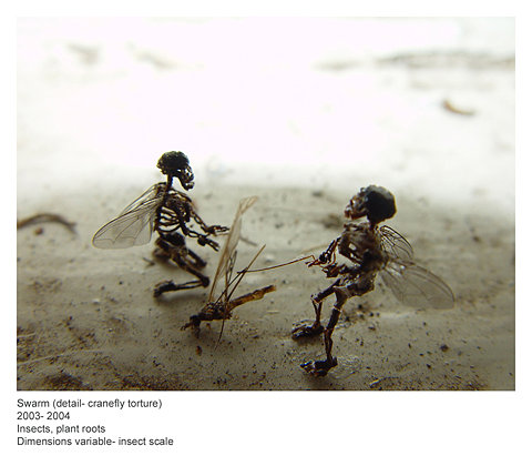 skeletal fairies torturing a cranefly