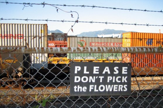 please don't pick the flowers