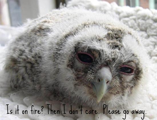 hungover owl haz a kweschun