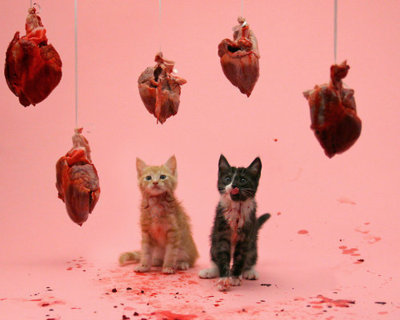 Kittens and hearts and pink! Oh my!