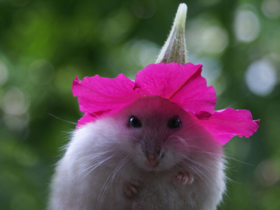 Flower Hat Mouse makes it all better