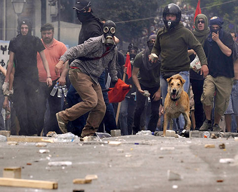 Riot Dog will take a bite out of the IMF