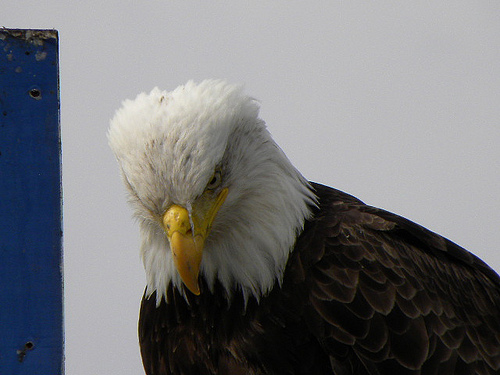 Parental Eagle is not so much angry as disappointed in you