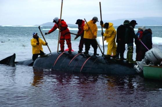 Bowhead Whale Hunt by Glenn Williams. Didja bring yer fork?