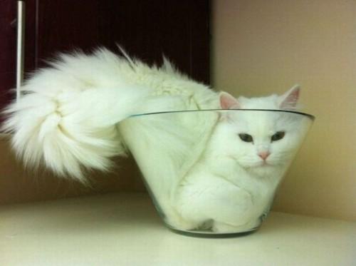 Bonsai kitteh bowl model