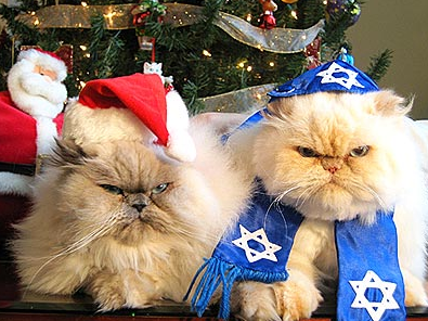 Hanukah and Christmas kittehs