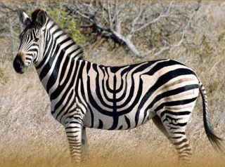 Hanukah in black and white