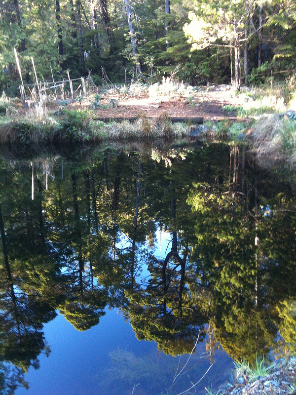 OpHippie My Pond