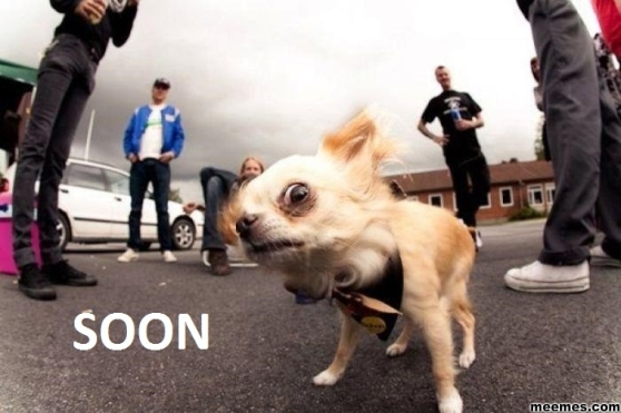 Soon. In fact, NOW says Evil Chihuahua