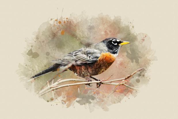 Robin by Christina Rollo